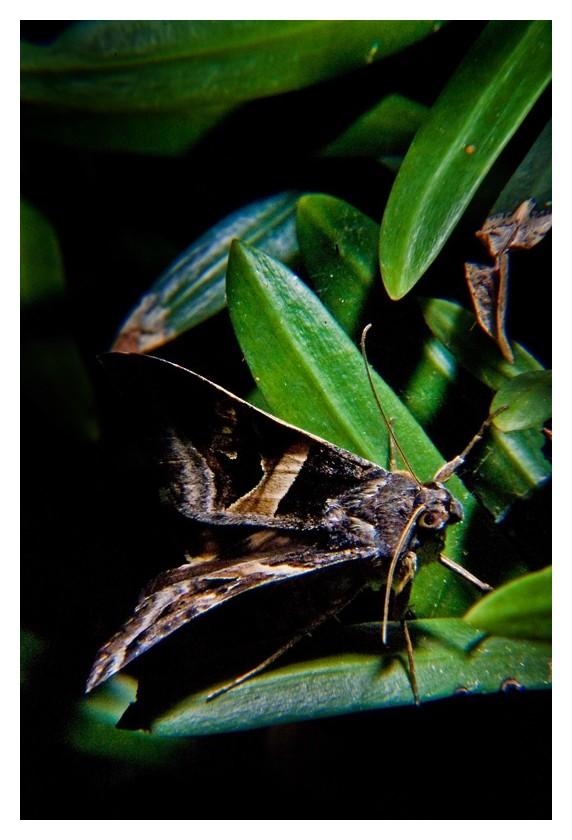 Moth on plant