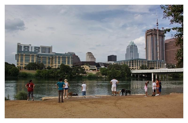 Dogs going into the lake, Townlake, Austin