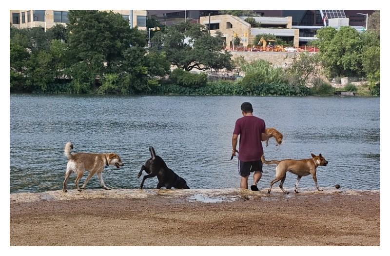 Man holding dog above the lake, Townlake, Austin