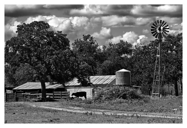 Cow, barn, trees, and windmill