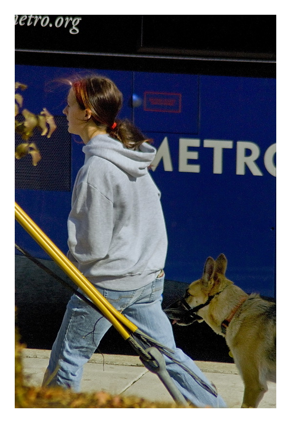Woman walking leashed dog