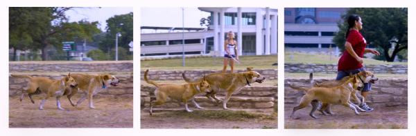 Running dog tryptych