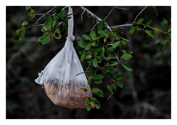 Bag hanging in tree