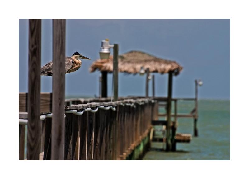 Rockport: Heron, Pier, Fulton