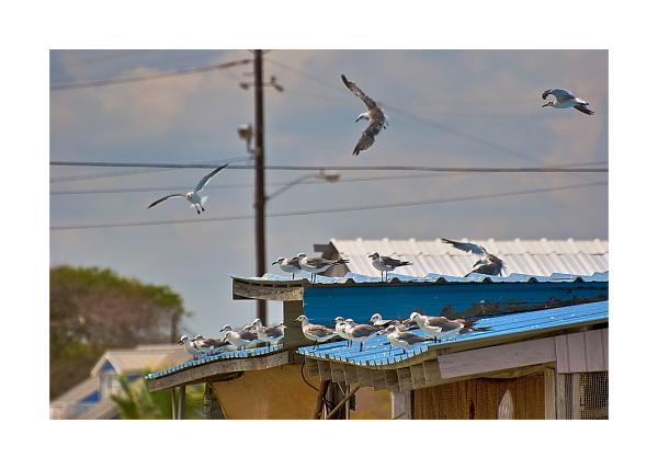 Gull Roost