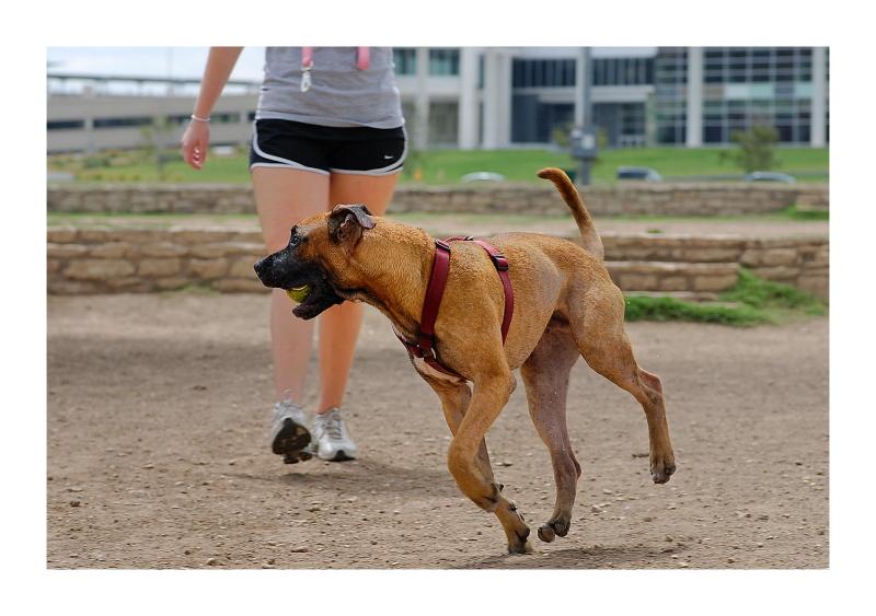Austin Dog Park Redux: It's Mine