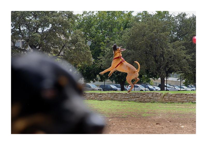Austin Dog Park Redux: I've Got It