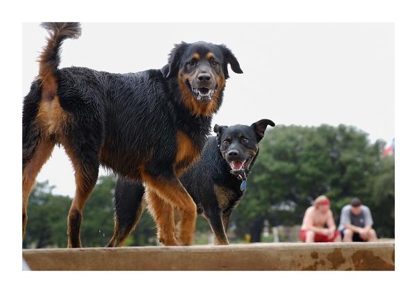 Austin Dog Park Redux: Double Dog Down