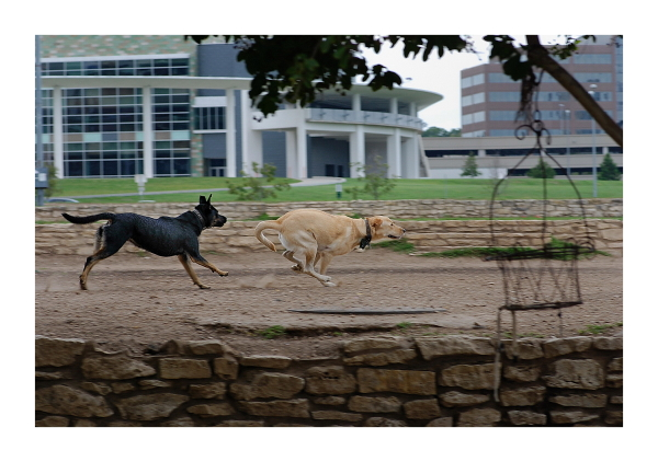 Austin Dog Park Redux:  Rabbit Run