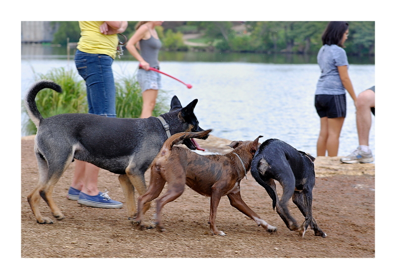 Austin Dog Park Redux:  Delusions of Mastery