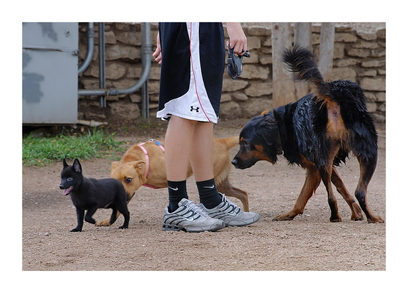 Austin Dog Park Redux: Small, Medium, Large