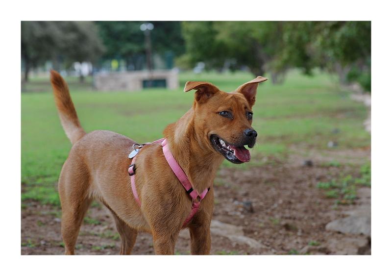 Austin Dog Park Redux: Fido
