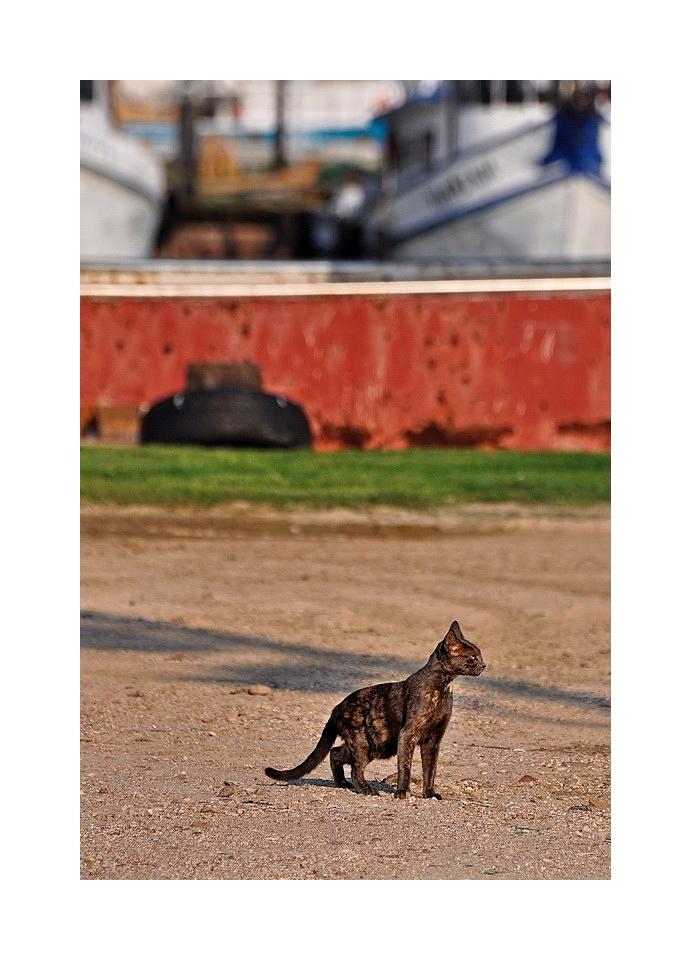 Dock Yard Cat