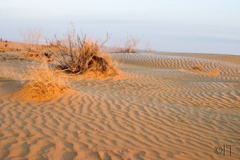 Turkmenistan. Karakum desert