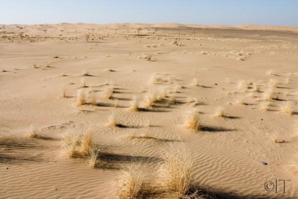 Turkmenistan. Karakum desert.