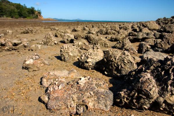 Australia. Hamilton Island 6