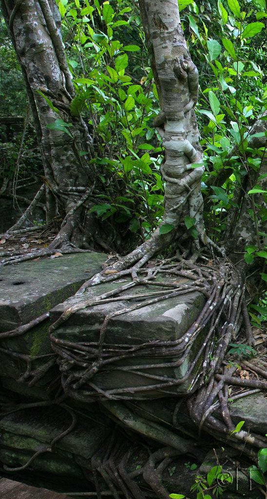 Cambodia. Beng Mealea.