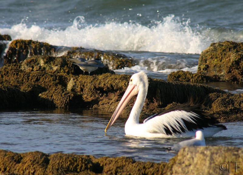 Australia. Jervis Bay 3.