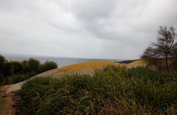 Australia. Montague Island.