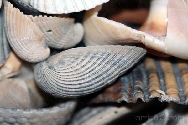 Seashells in glass bowl