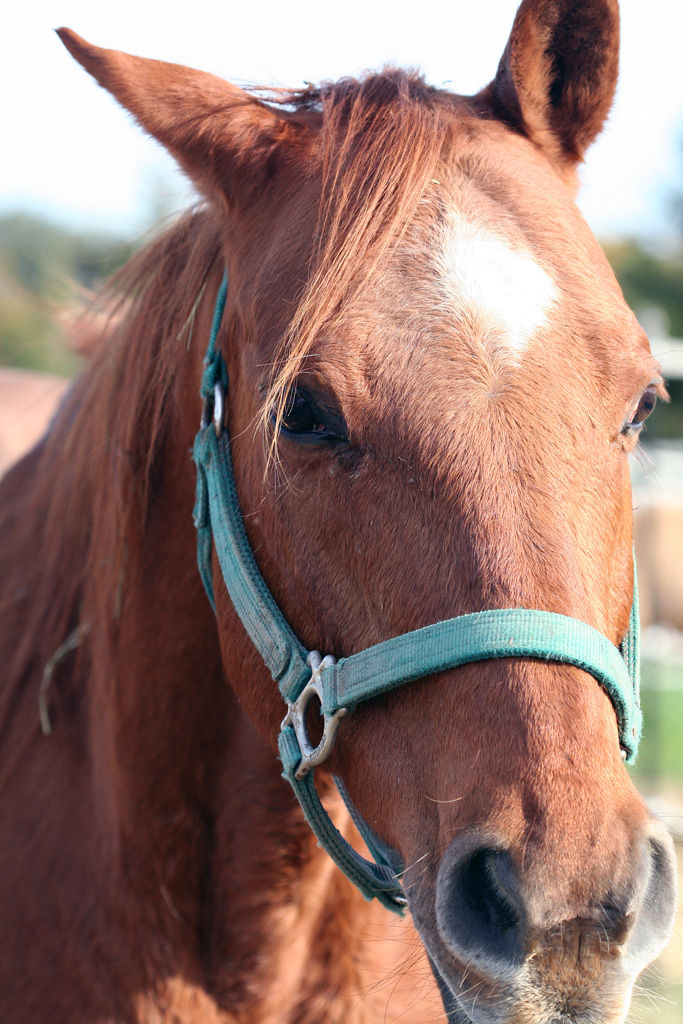 Horse at Rescue