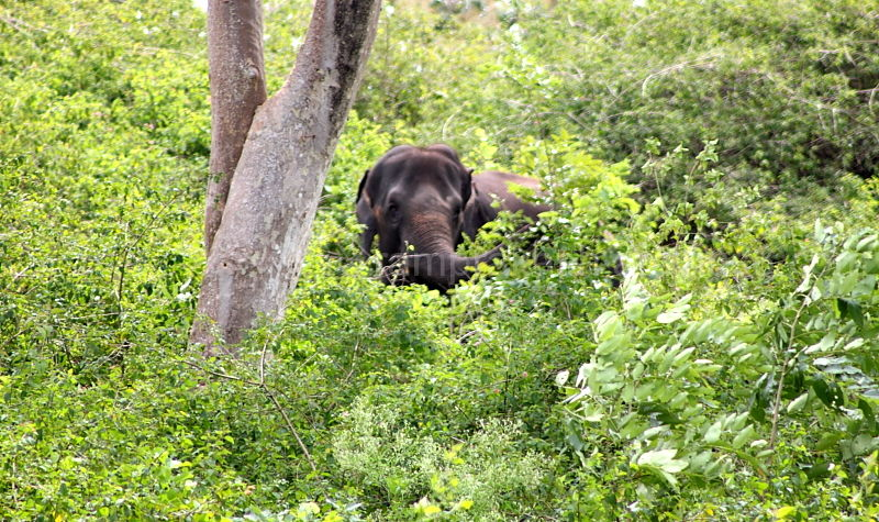 Elephant sited on a deep forest