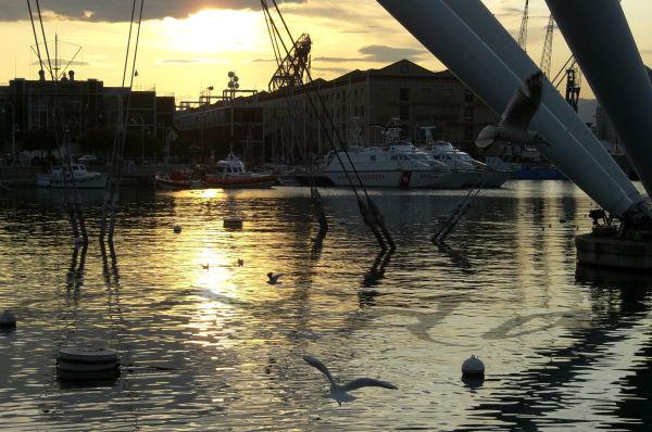 seagulls in genova