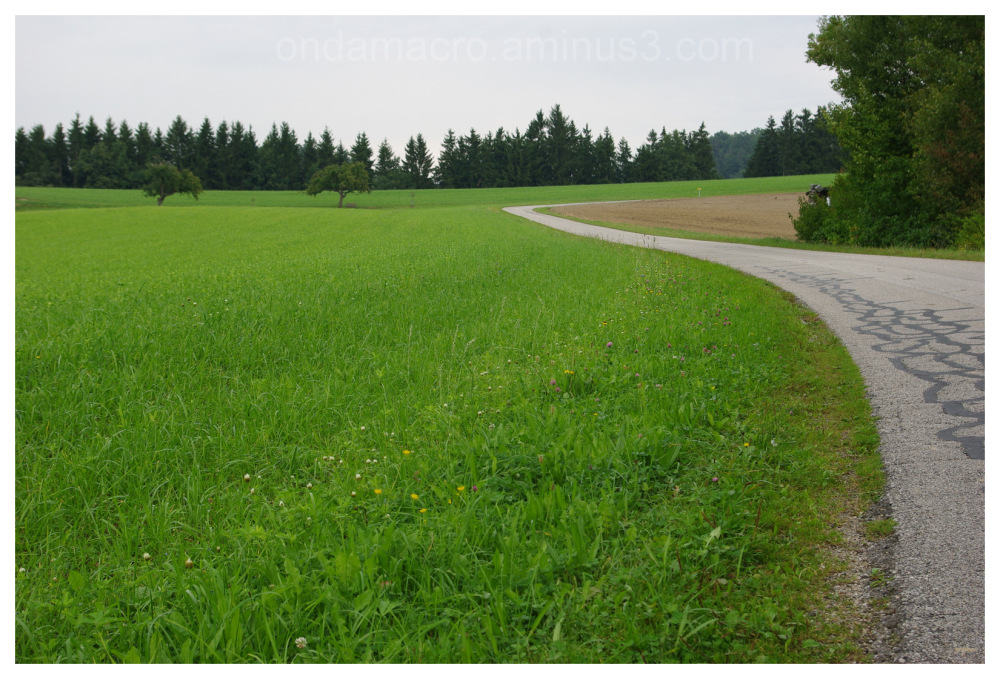 green fields with country road