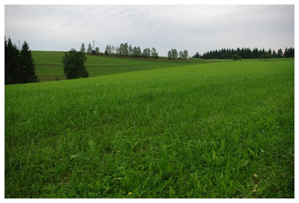 smooth field panorama