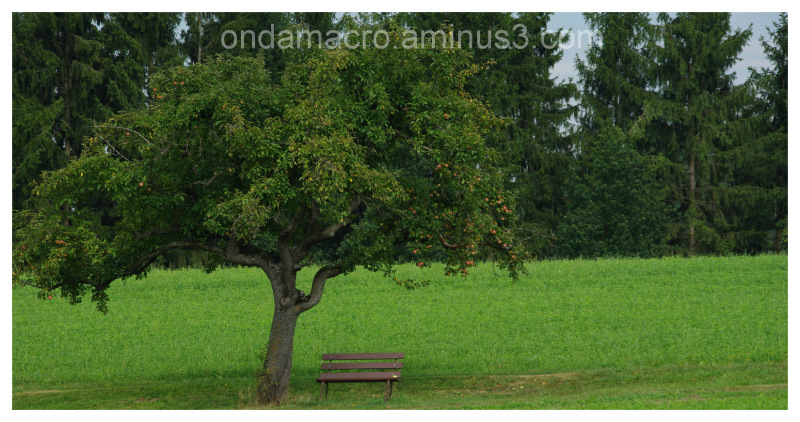 Lonely bench in a field
