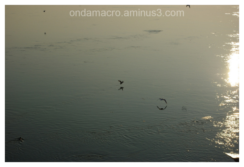 seagull and duck flying on the river