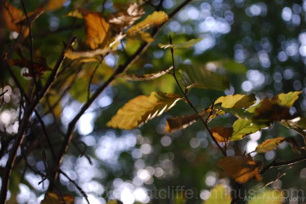 Autumn leaves in the wind