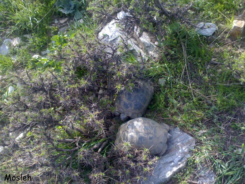 Tortoises(kisel)and spring!!