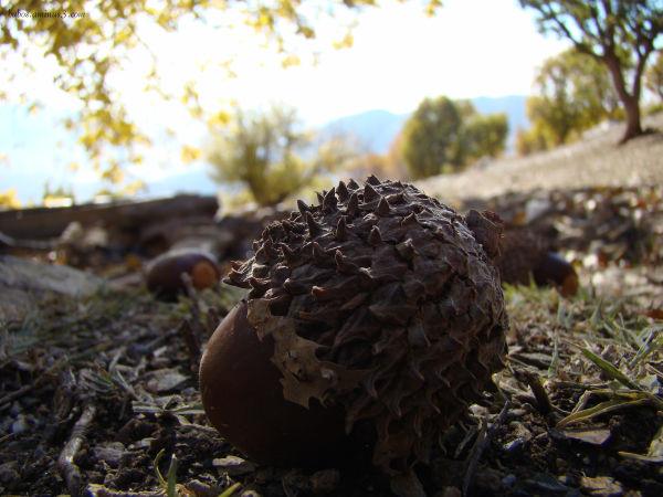 chestnut mountain rashaghlat