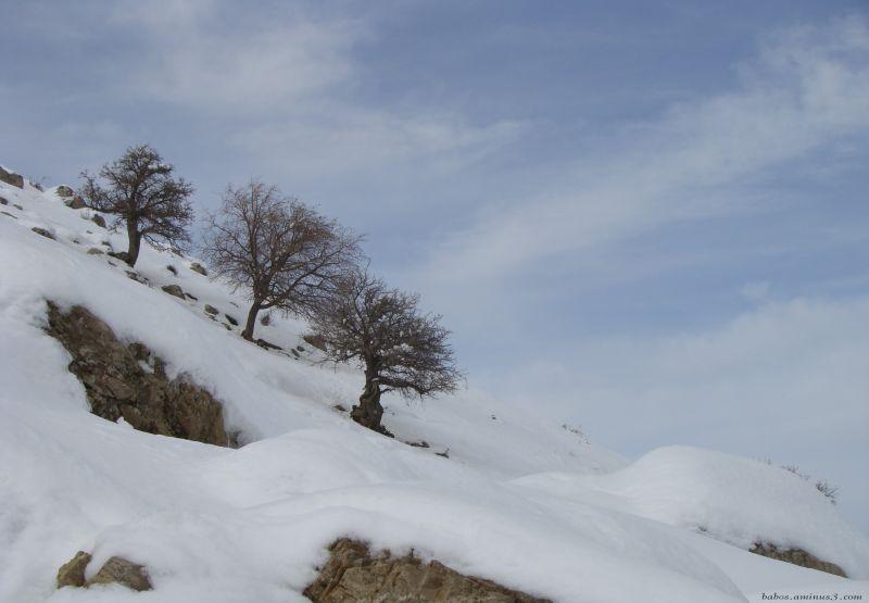 beautiful tree babos mjase baneh