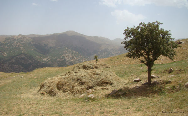 Babos (village Kani nav )