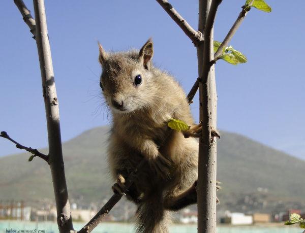 Smora or Squirrel