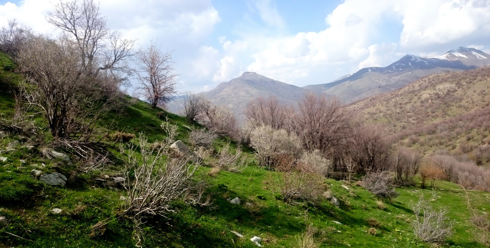 بهاري كوردستان