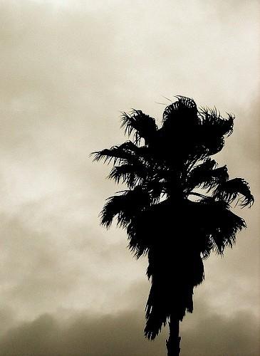 A weired terrifying shot from a beatiful palm!
