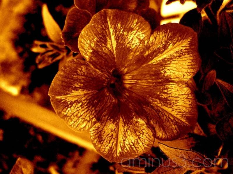 flower sepia