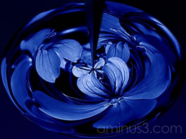 Flower cyanotype