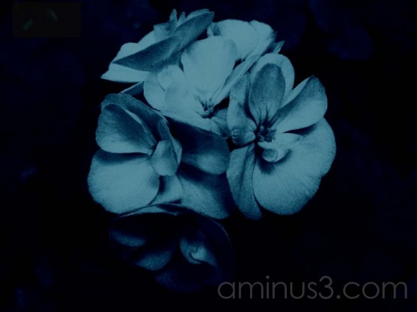 flower digital cyanotype
