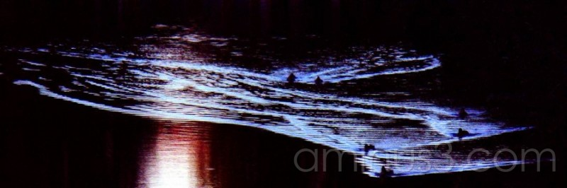 Abstract patter formed by ducks on water