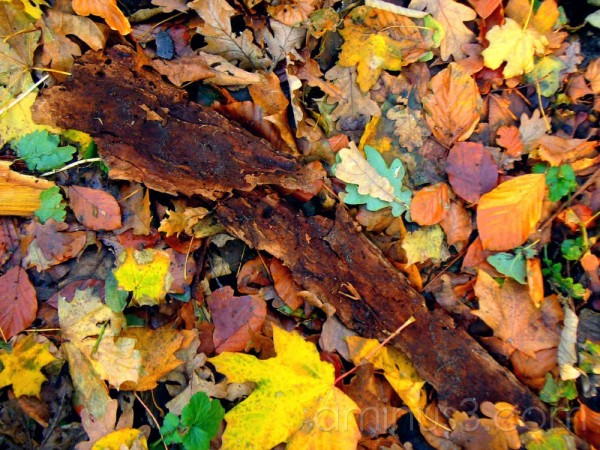 Leaves and tree bark on forest floor in Autumn