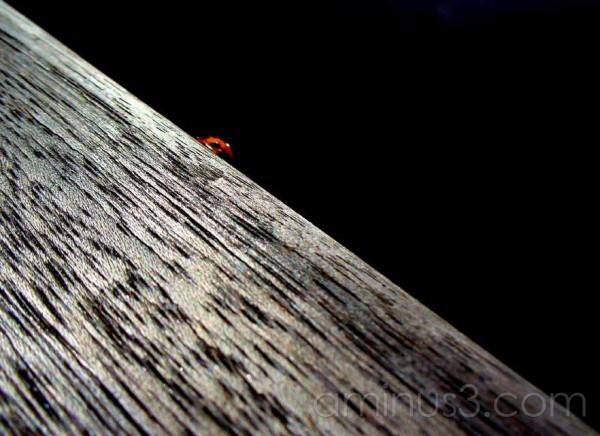 LAdybird on wooden surface
