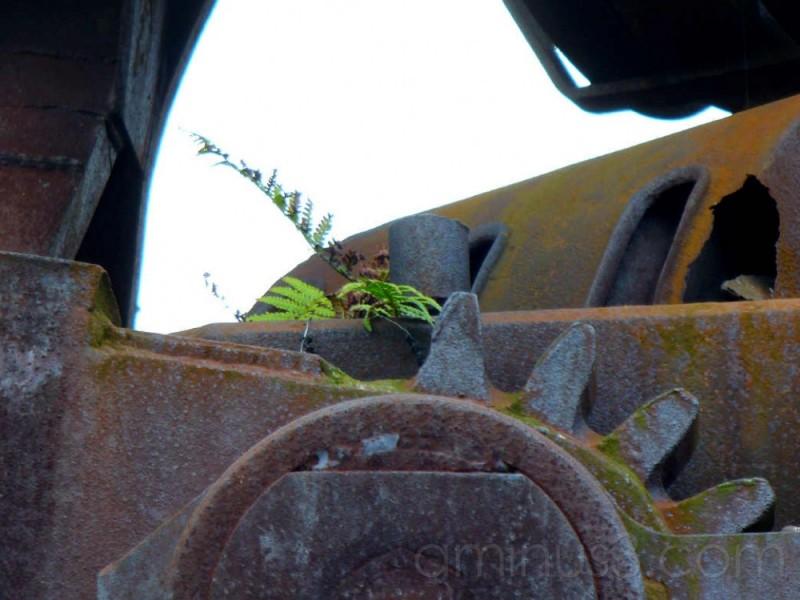 ferns growin on  old machine