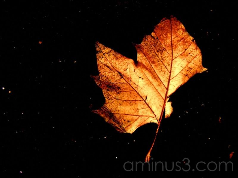 leaf on black background