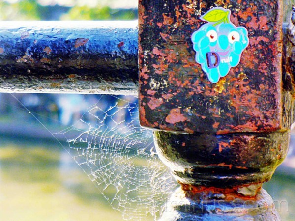 Detail of railing with spidersweb and bluse sticke