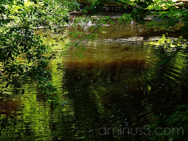 Ripples on water Haagse Boos Den Haag Netherlands