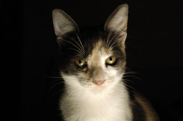 My cat friend Cocó, by Guillermina Ruiz